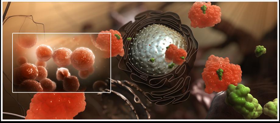 Нормы лейкоцитов