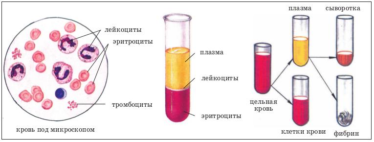 Анализ крови на онкомаркеры: все виды по областям, нормы, рекомендации