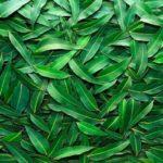Монастырский чай альтернативное средство лечения гипертонии