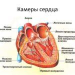 Объем сердечных камер