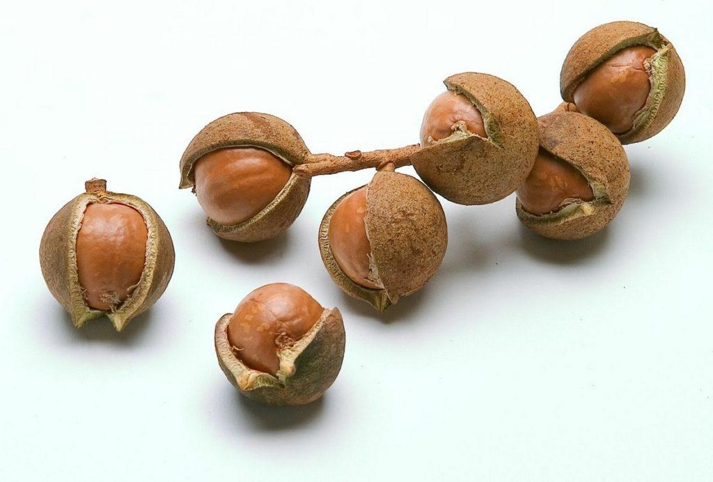 Орехи макадамия: польза и вред