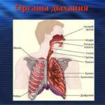 Паралич органов дыхания