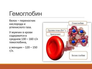 Взаимодействия с белковыми компонентами крови